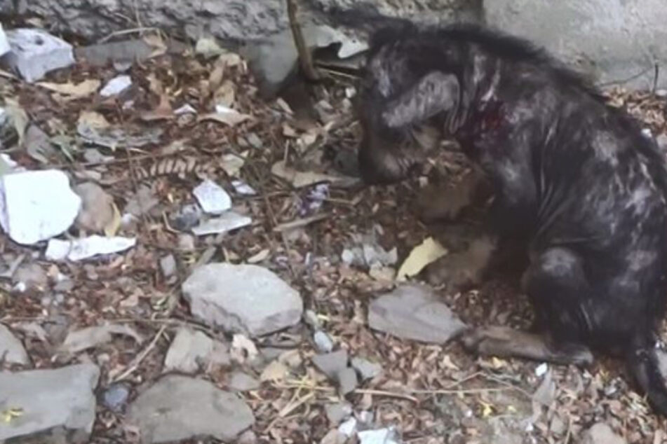 Einsam und allein: Kranker Hund ist voller Furcht, als endlich jemand Mitgefühl zeigt