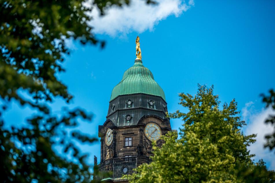 Hoch oben auf dem Rathausturm lebt eine von nur zwei Wanderfalken-Familien in Dresden.