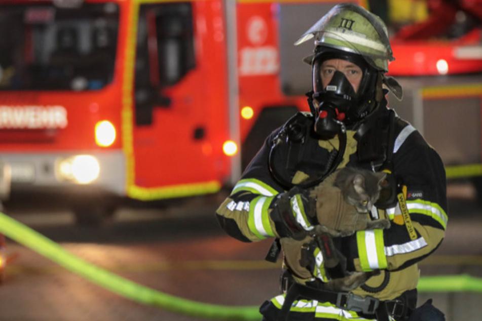 Die Kameraden der Feuerwehr konnten einen Mann und drei Katzen vor den Flammen retten.