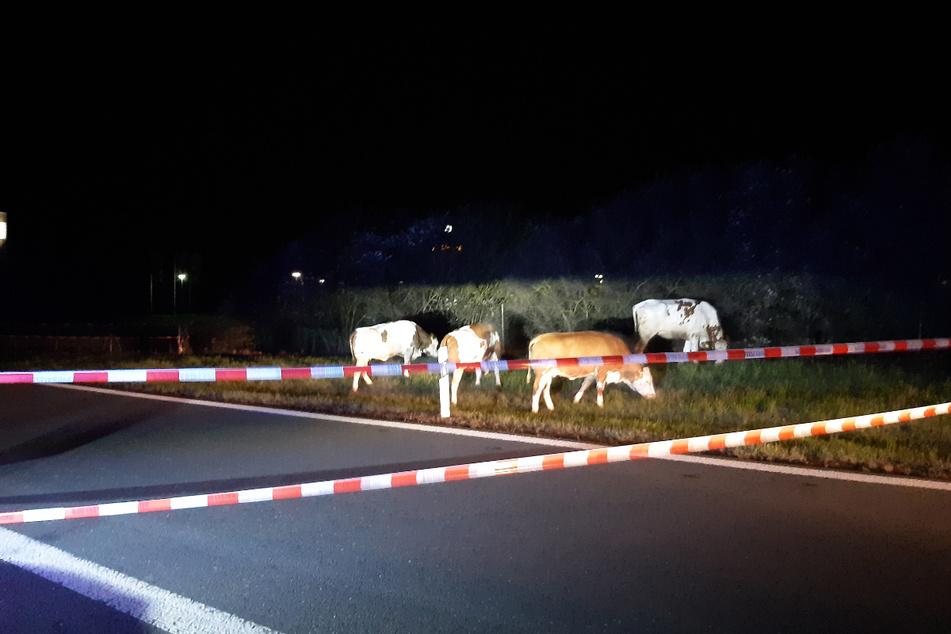 Letzte Abfahrt Plauen-Ost: Mit rot-weißem Absperrband stoppte die Polizei die vier rasenden Bullen.