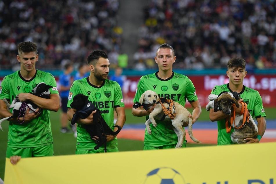 Die Profis von Dynamo Bukarest halten die Hunde beim Betreten des Platzes und präsentieren sie so hoffentlich einem neuen Besitzer. Die Kampagne läuft die komplette Saison.