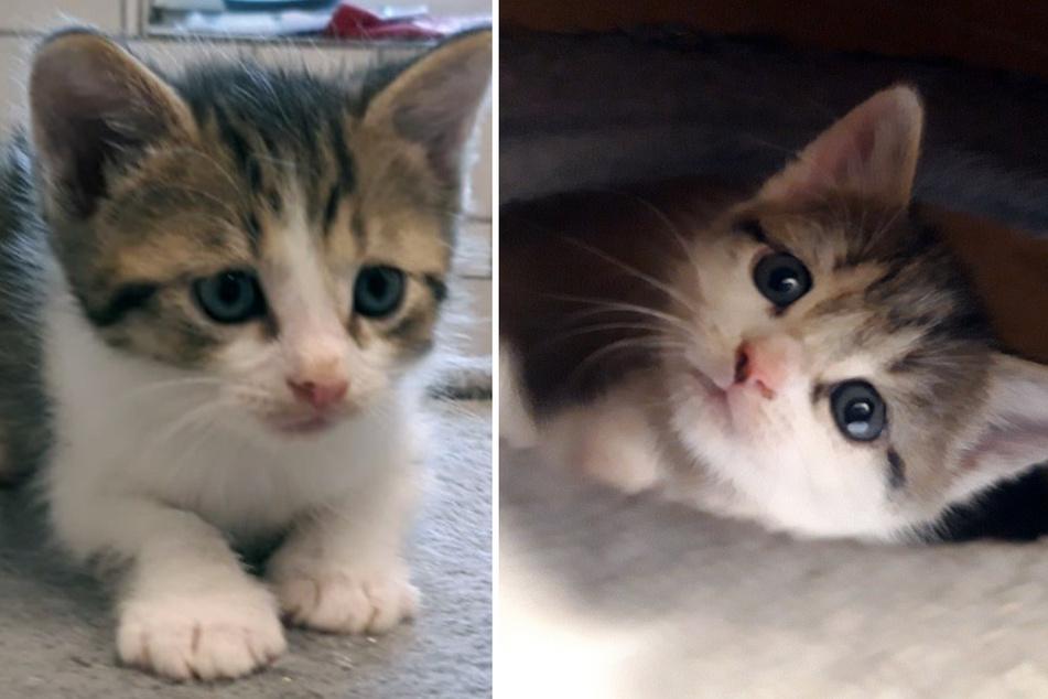 Nach Familien-Zusammenführung: Süße Babykatzen haben jetzt Namen
