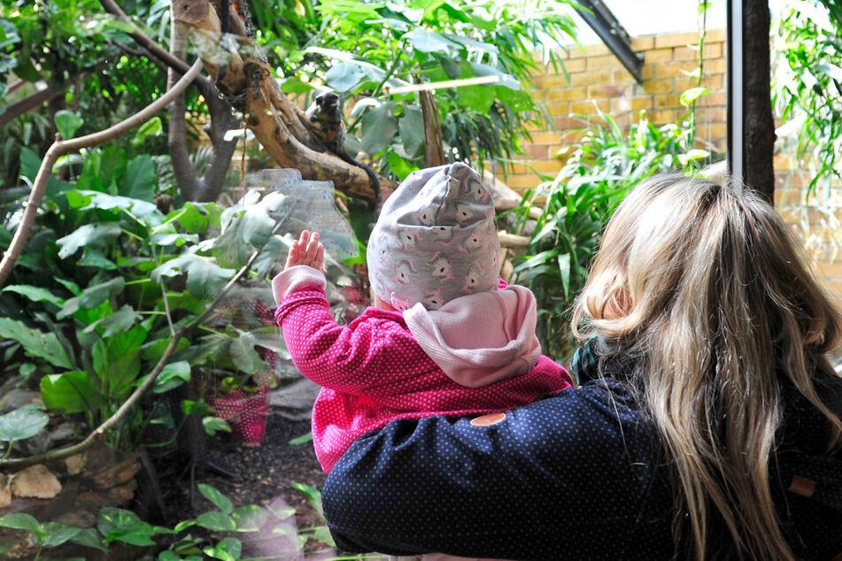 Im Tropenhaus gibt es kleinere Affenarten zu bestaunen.