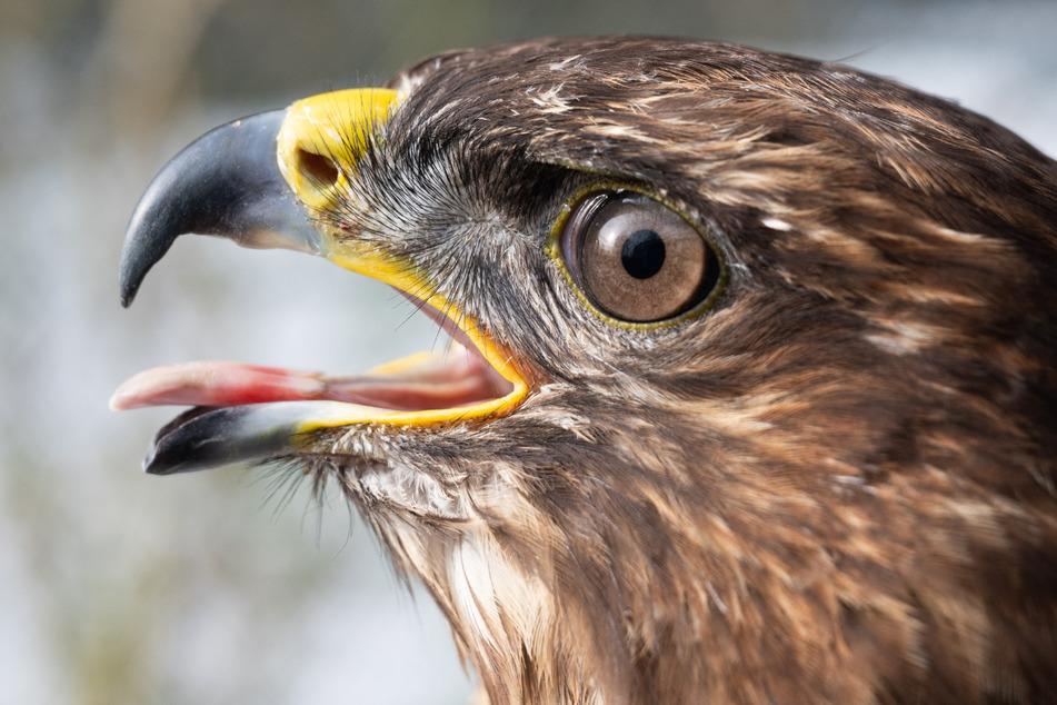 Erneut toter Greifvogel in Niederbayern gefunden: 5000 Euro Belohnung ausgesetzt