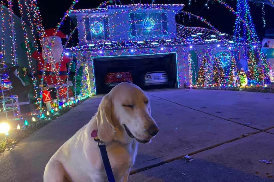 All proceeds from the light show go to a local dog rescue organization.