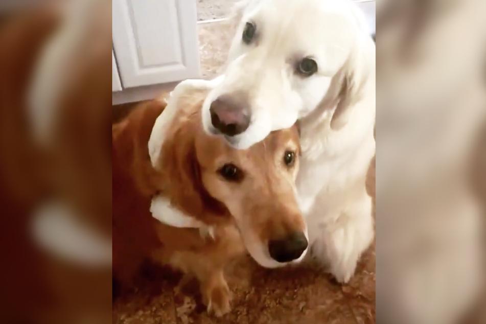 Watson (r.) umarmt Hunde-Bruder Kiko.