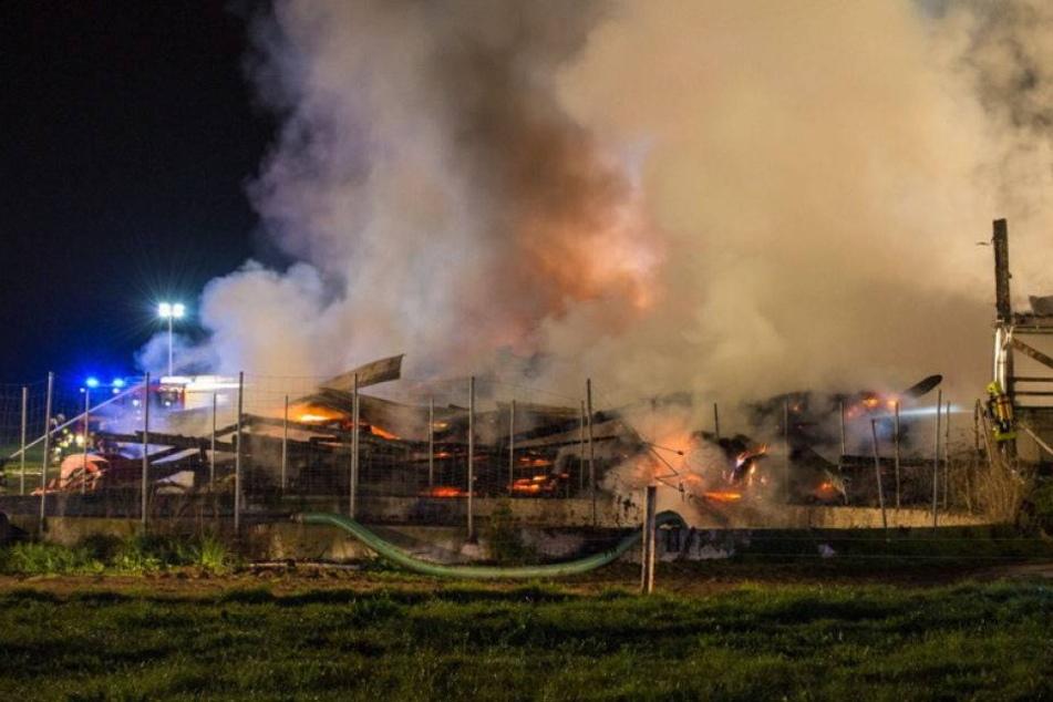 Großbrand in Stall: 80 Rindern droht der Feuertod