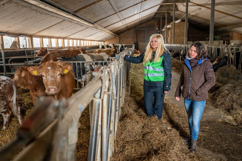"""Conny Böttger (45, l.) und Julie Siemering (20) neben der gerade geretteten Mutter-Kuh """"Margo"""" mit Jungtier """"Julie-Ann"""" (1) im Gnadenhof der Tierschützerinnen bei Augustusburg."""
