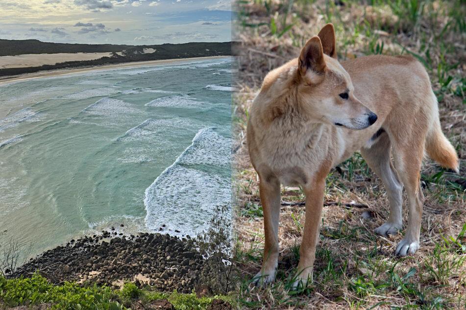 Junge (2) schleicht sich aus Elternhaus und begegnet hungrigem Wildhund!