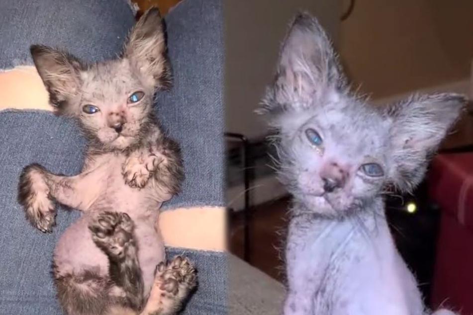 Frau denkt, ihre Katze sei krank: Doch in Wahrheit zeigt das Tier, was es wirklich ist!