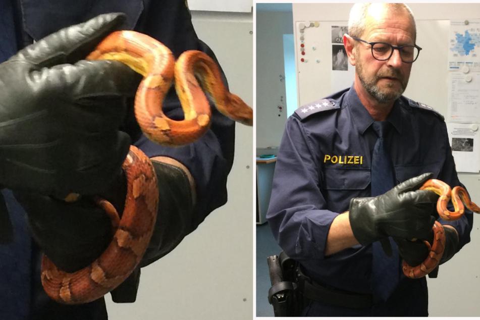 Frau entdeckt 1,20 Meter lange Schlange im Komposthaufen