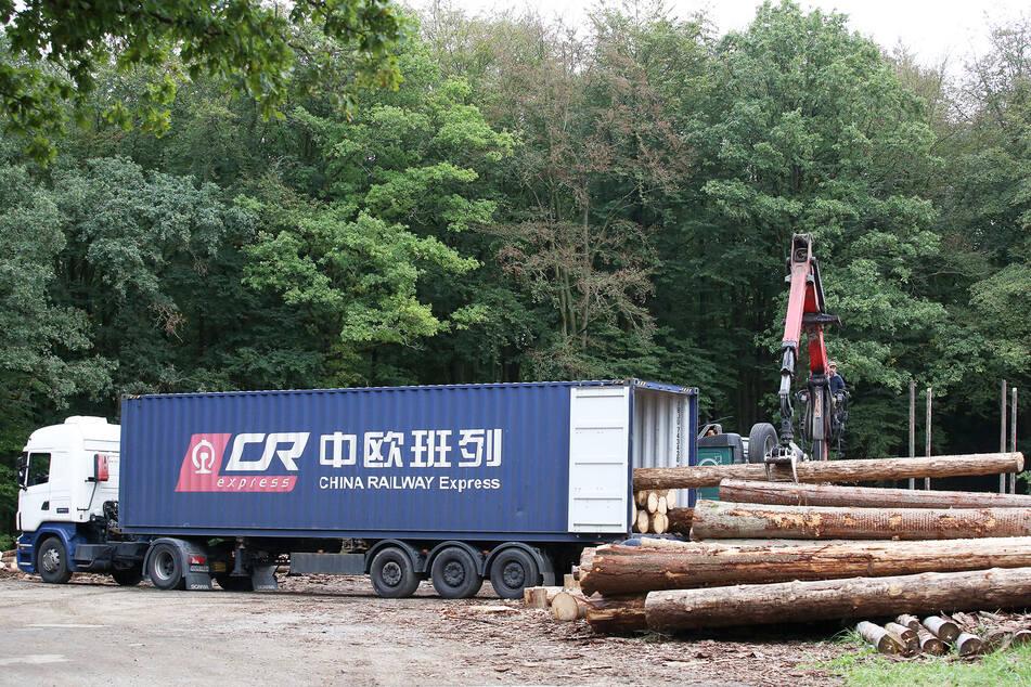 China stillt seinen Holzhunger in Deutschland. Per Container-Schiff werden die Stämme ins Reich der Mitte gebracht.