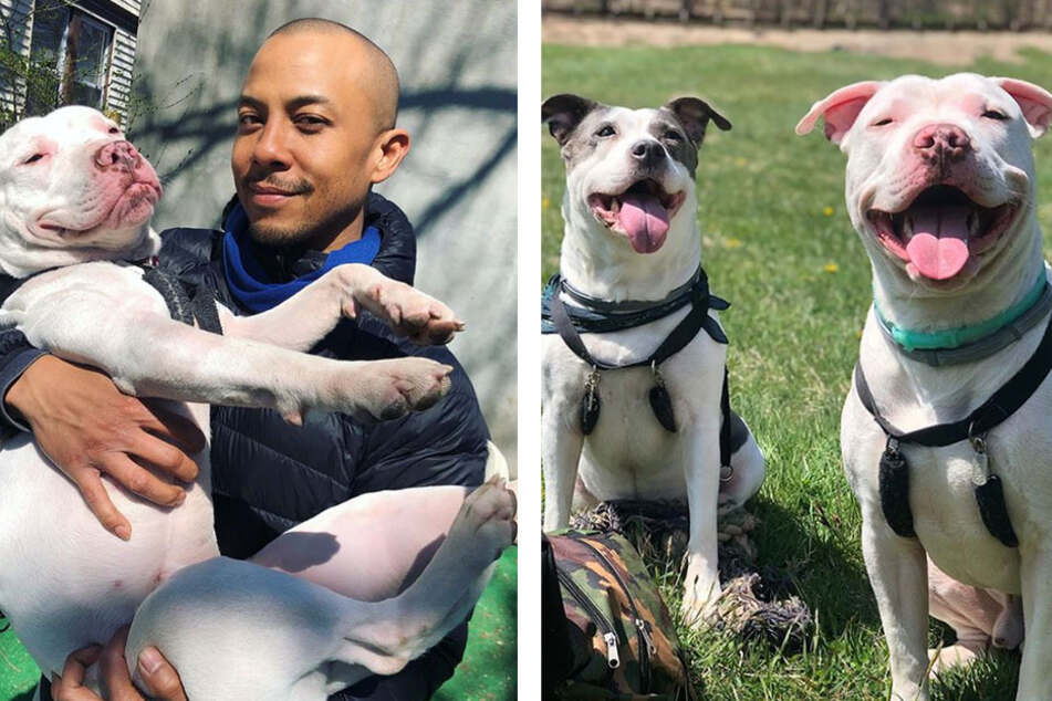 Family finds out their rescue dog has a healing superpower!