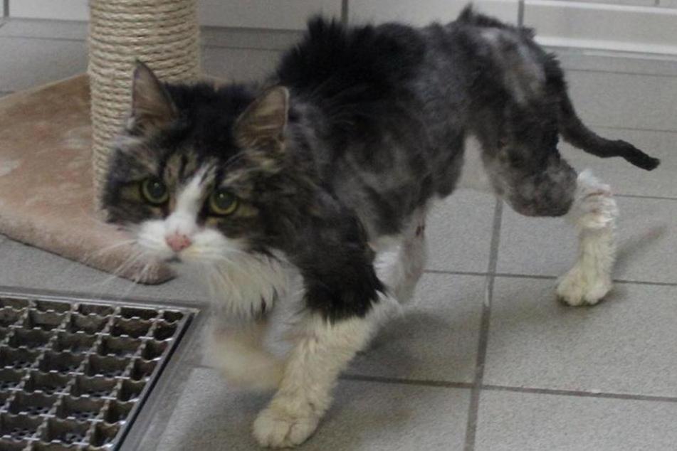 Hamburgs ärmste Katze: Jetzt ist Lilo tot!