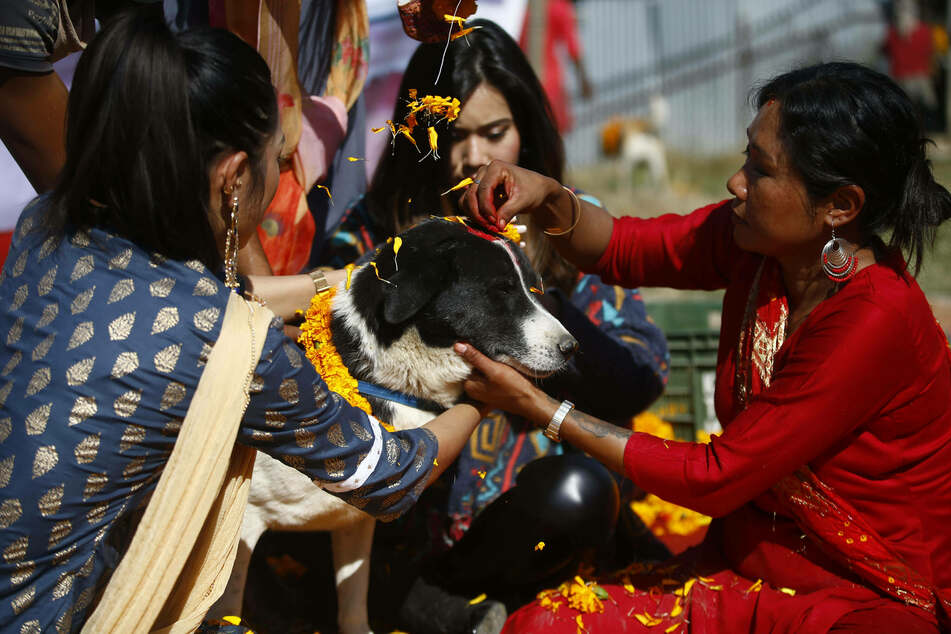 Women decorate injured and rescued dogs with garlands.