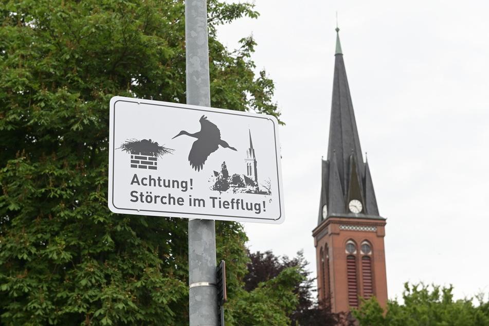 Jetzt weiß es jeder: Rings um den Grünaer Kirchturm fliegen die Störche tief.