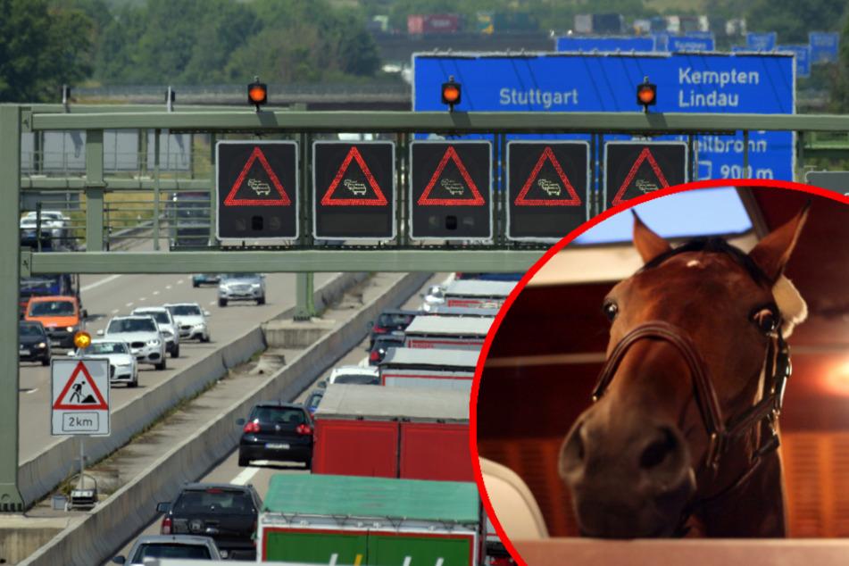 Transporter mit Pferd kippt auf der A7 um, zwei Verletzte