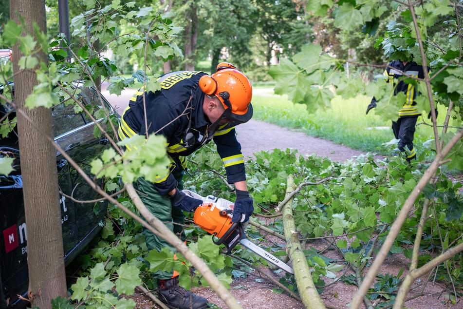 Die Feuerwehr zersägte den entwurzelten Baum, entfernte diesen anschließend vom Gehweg.