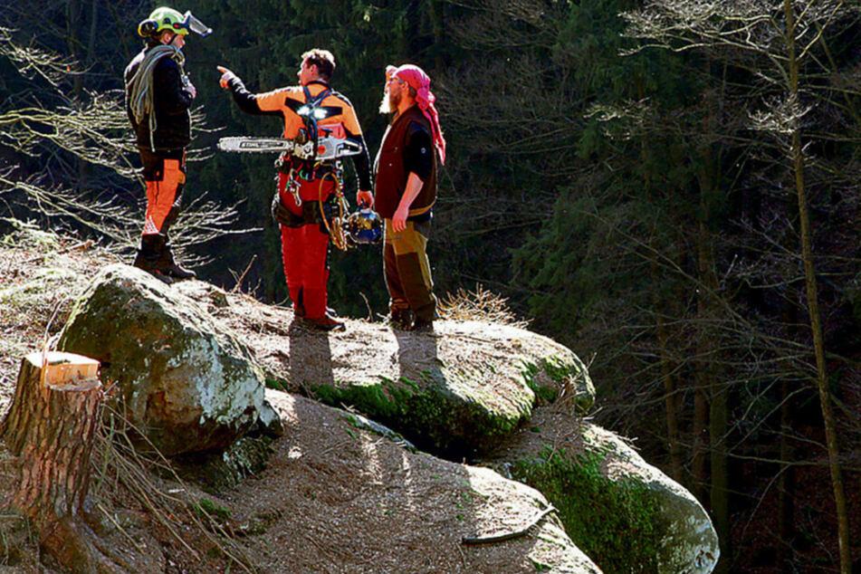 Dresden: Hier holen Holzfäller die toten Fichten vom Fels