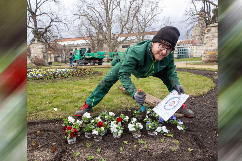 Landschaftsgärtner Tony Wirth (24) lässt aus Stiefmütterchen Juwelen entstehen.