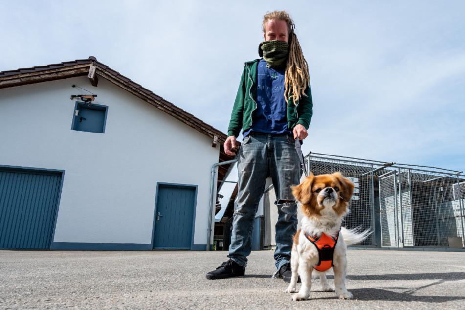 """Ein Mann geht mit Pekinesenmischling """"Charly"""" aus dem Tierheim Straubing spazieren."""