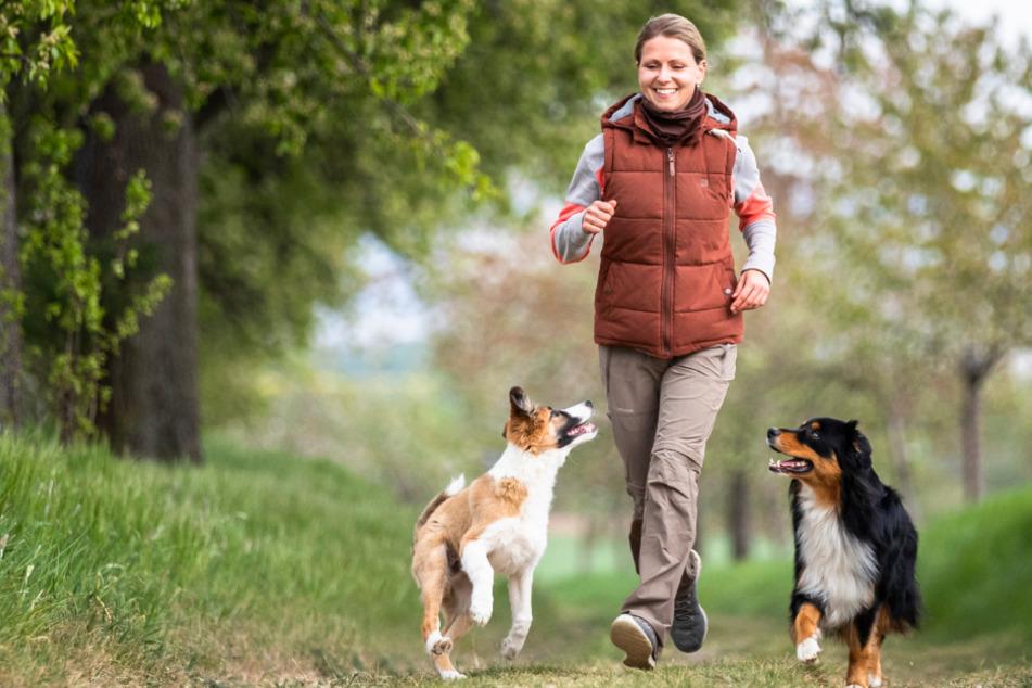 Corona-Krise löst Haustier-Boom in Sachsen aus: Hundewelpen gefragt wie nie