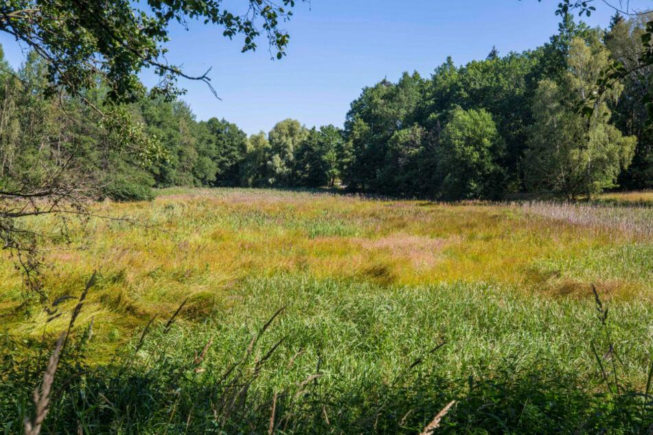 """Diese trockengelegte """"Wiese"""" war mal ein Teich und wird nun ein Wasserbiotop für seltene Tierarten."""