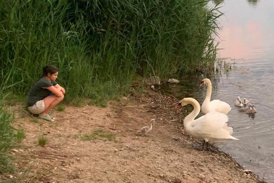 Saskia Keller (35) brachte das Schwanen-Baby zurück zu seinen Eltern.
