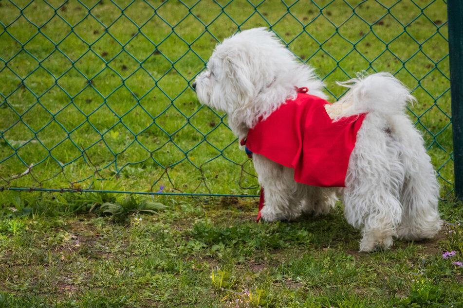 Sie waren krank und aggressiv: Hundewelpen von Tierhändler verschleppt und im Netz verkauft?