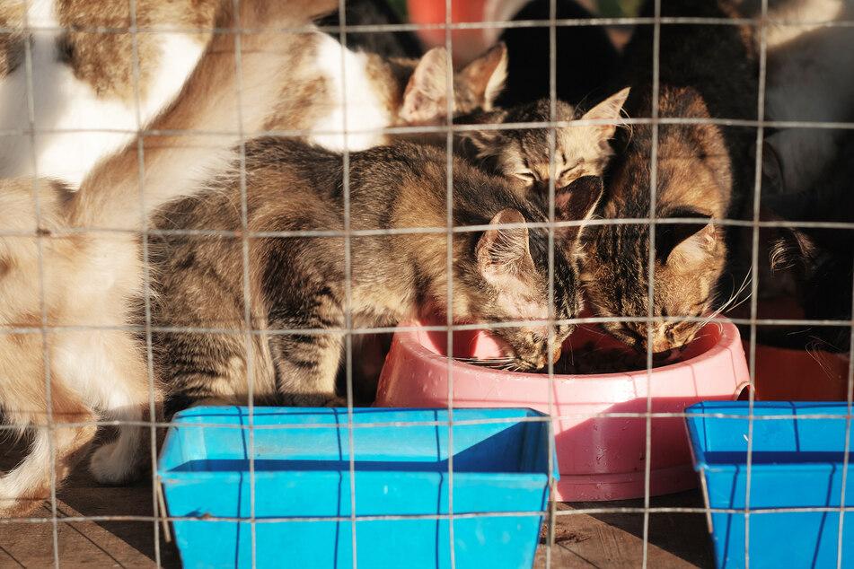 Katzen essen an einer Futterstelle im Tierheim. (Symbolbild)