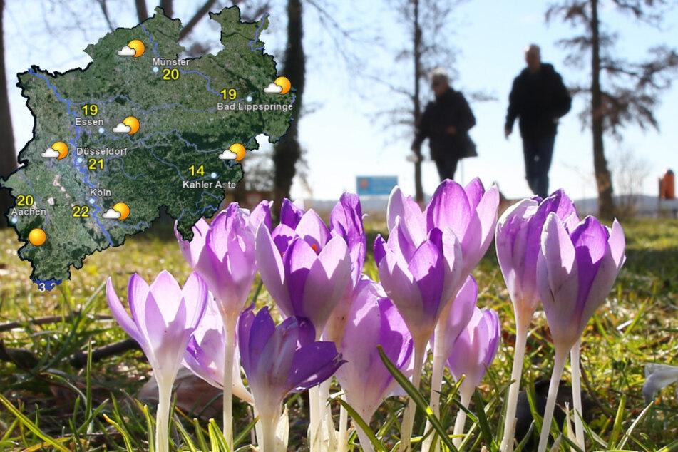 Pünktlich zum Ferienstart am Montag gibt es laut Prognose des Deutschen Wetterdienstes (DWD) reichlich Sonnenschein sowie ungewöhnlich milde Temperaturen.