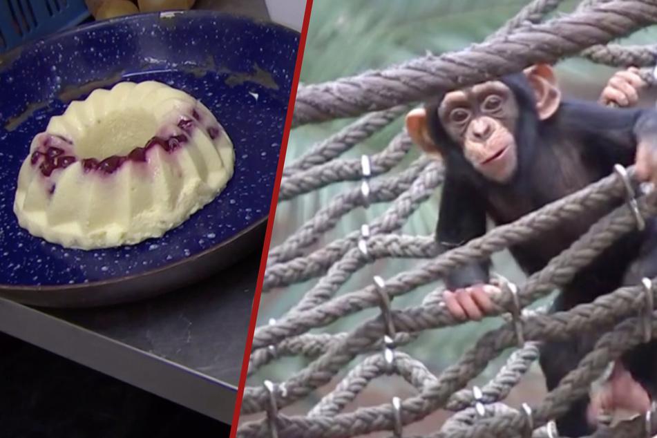 Happy Birthday! Im Zoo Leipzig steigt eine Party nach der anderen