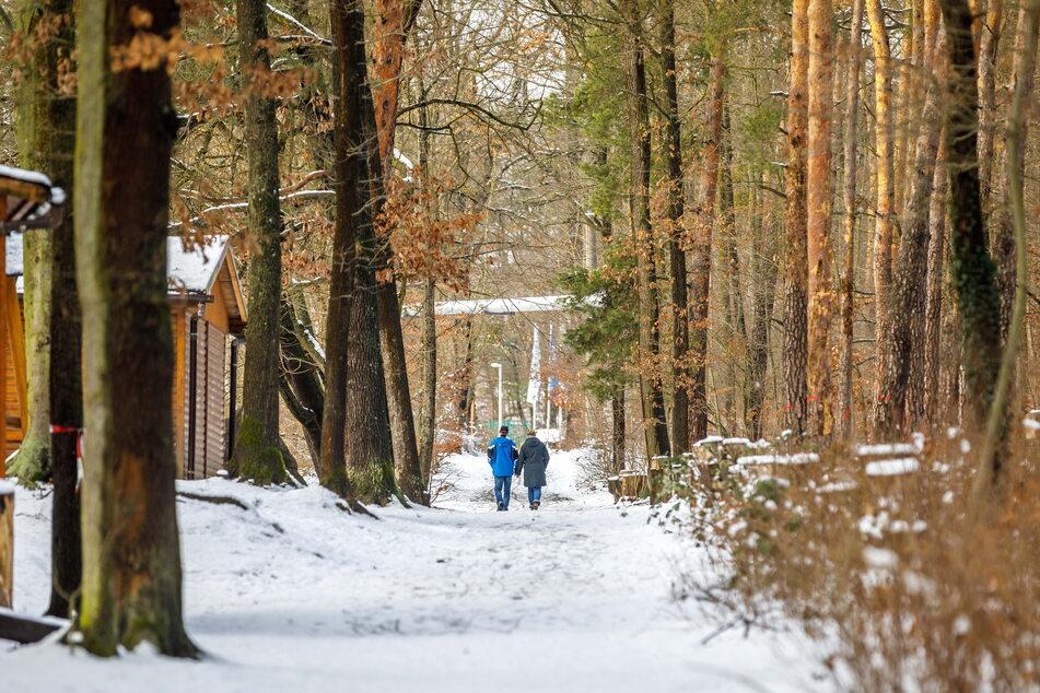 Aktuell ist der Albertpark ein Forst, damit könnte nächstes Jahr Schluss ein. Das Ziel: mehr Wildnis.