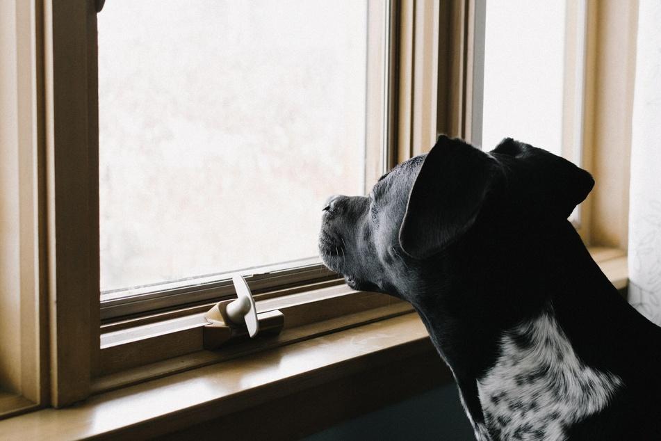 Hunde genießen die Zeit mit ihren Haltern sehr - und mögen es nicht, allein zu sein.