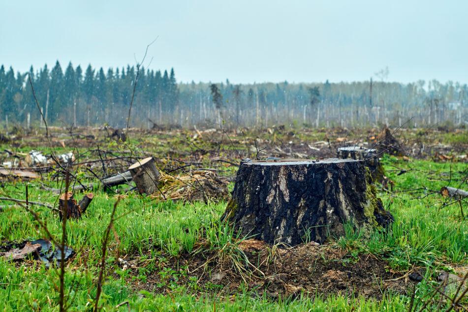 Durch Entwaldung und Erderwärmung sorgt der Mensch dafür, dass nur noch wenige Ökosysteme in ihrer Artenvielfalt intakt sind.