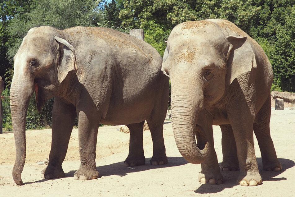 """Trotz Corona gehen im Leipziger Zoo die Dreharbeiten zu """"Elefant, Tiger & Co."""" weiter."""