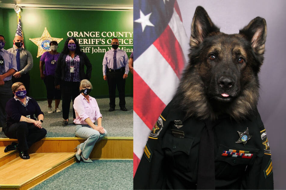 This dog is the best dressed police officer on the force!