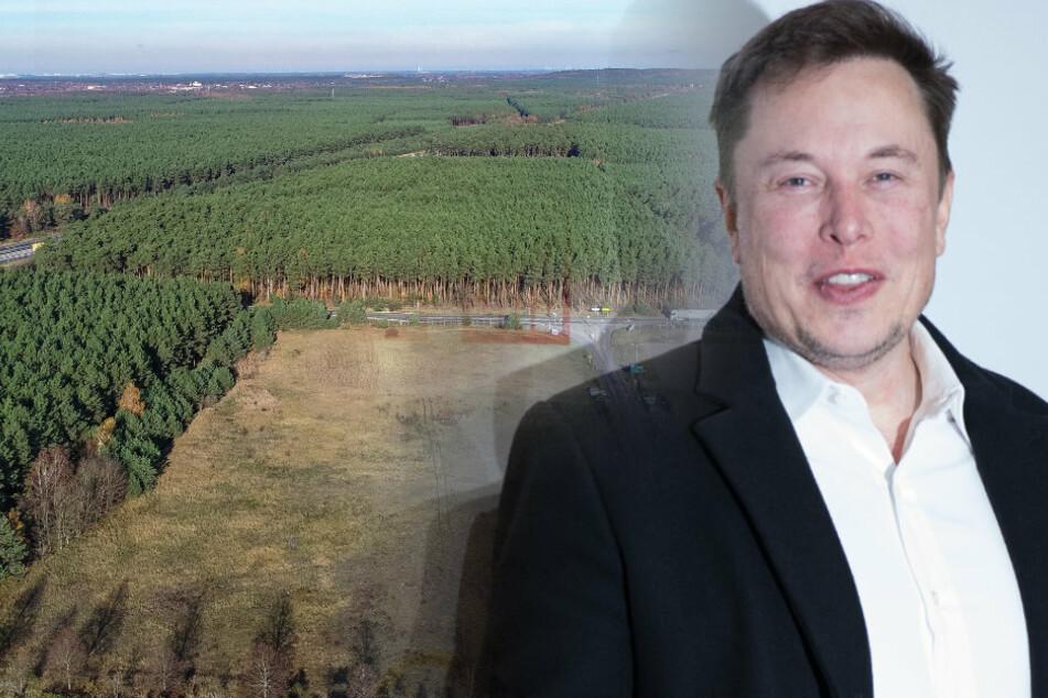 Deutsche Gigafabrik : Tesla-Aktie: Brandenburg soll Tesla mit Versprechungen gelockt haben