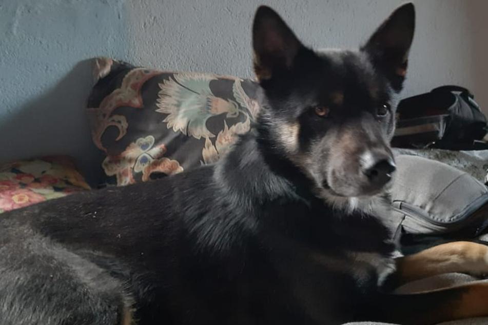 Hund vor Leipziger Supermarkt geklaut: Wer hat den süßen Mogli gesehen?