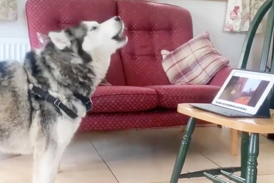 Telefoniert dieser Hund wirklich mit einem anderen Vierbeiner?