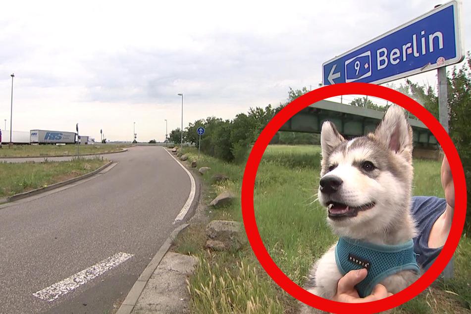 Skys Besitzer haben den kleinen Welpen einfach an einer Autobahnraststätte ausgesetzt.