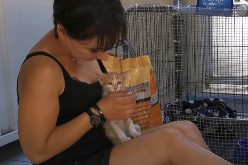 Ermioni kümmerte sich rührend um die Katze.