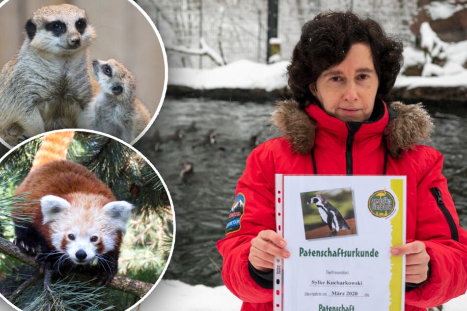 Wegen Corona extra Patenschaft: Zoos und Tierparks in der Region erleben Boom