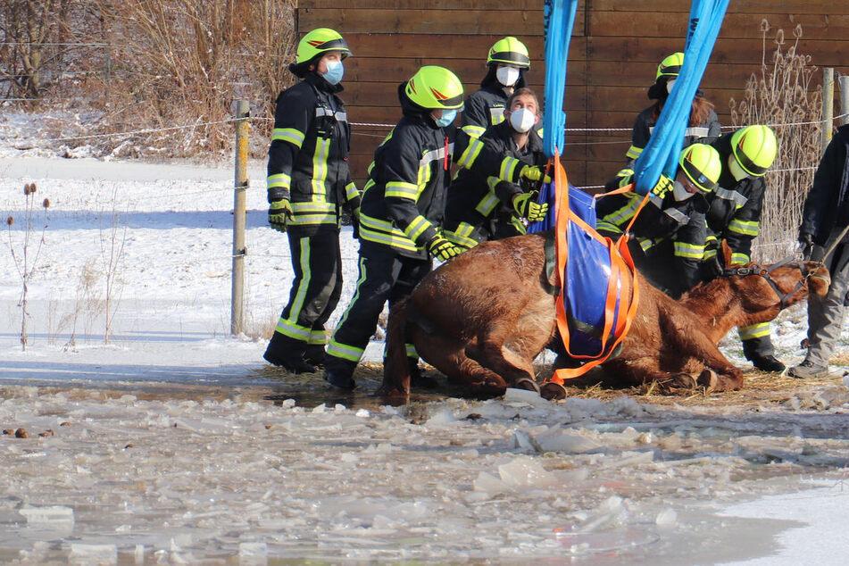 Feuerwehrleute umringen das verletzte Pferd.