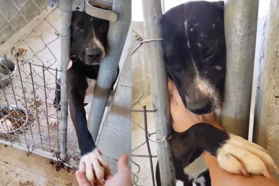 Nach 1,5 Jahren im Tierheim: Hund reicht verzweifelt jedem die Pfote