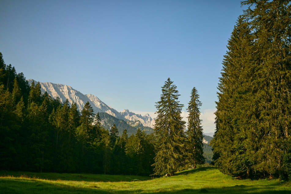 Letzte Ruhe unter Bäumen: Erster Naturfriedhof im Staatsforst eröffnet
