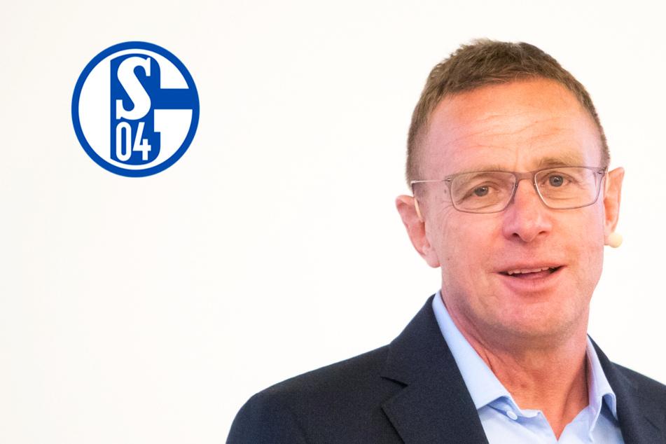 Schalke-Hammer: Holen die Knappen Ralf Rangnick zurück?