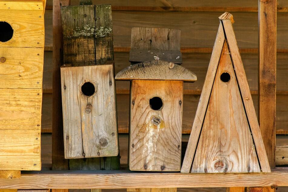 Das Aufhängen von artspezifischen Nistkästen ermöglicht es, den ganzen Lebenszyklus von Wildvögeln zu beobachten.