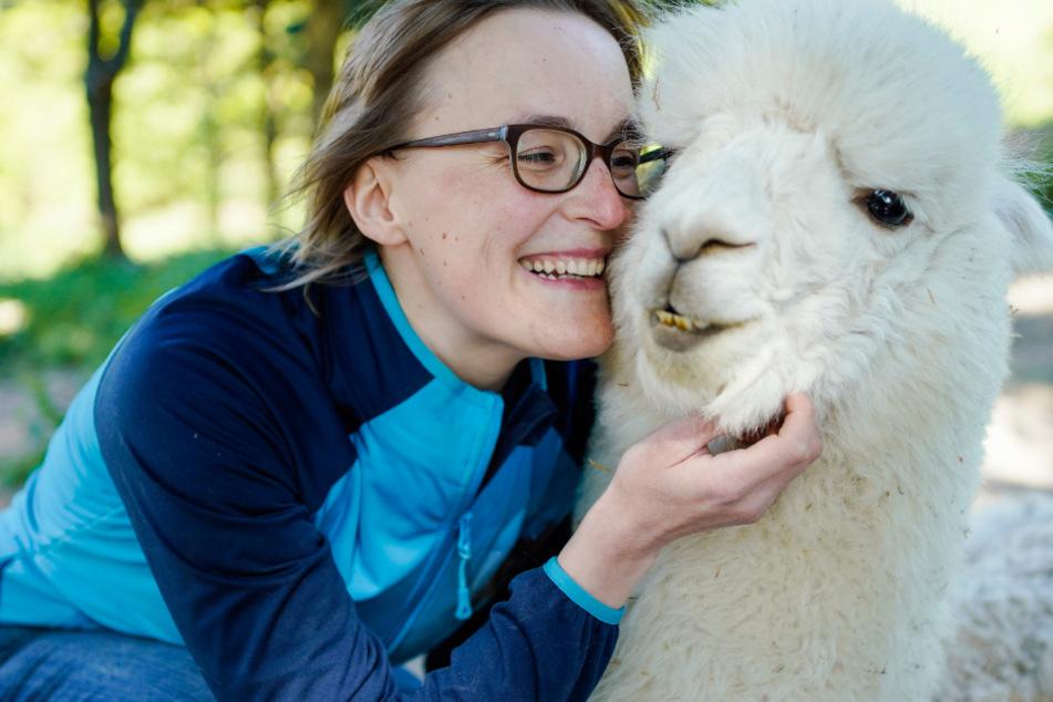 Wenn Wildschweine zur Plage werden: Helfen Alpakas?