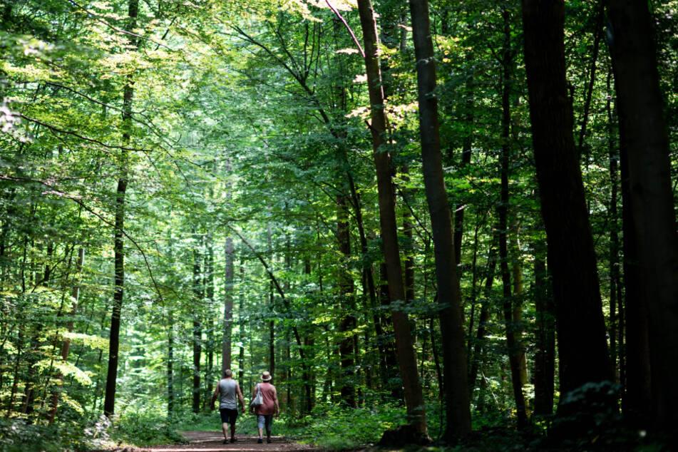 Spaziergänger machen Schock-Fund im Wald: Tiere für Voodoo-Rituale geopfert!